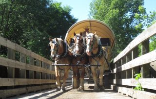 Covered Wagon Ride - Horses
